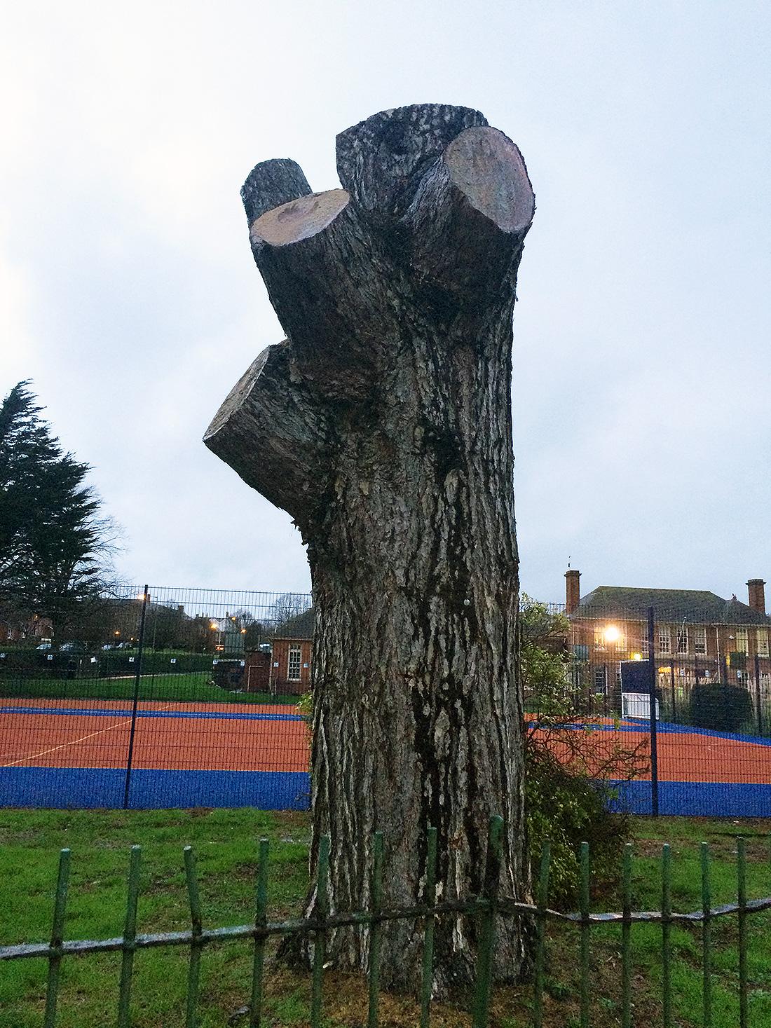 The original tree stump